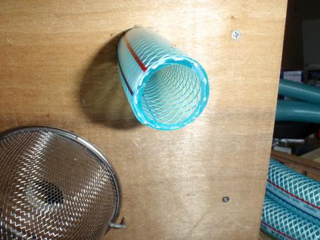 Honeybee2010042202.jpg