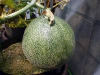 greenmelon2008082401.jpg