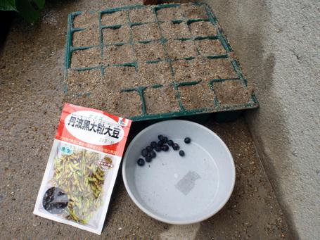 kurodaizu20090627.jpg