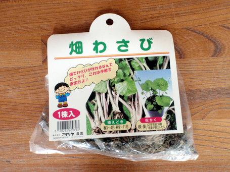 wasabi2009032901.jpg